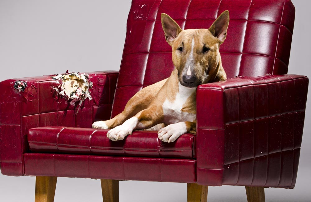 Picture of a dog on red chair