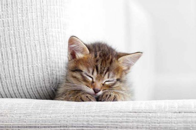 Picture of kitten on the sofa