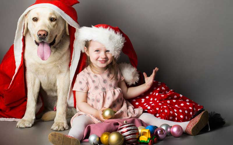 Picture of a Labrador Retriever and girl at Christmas