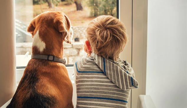 Picture of dog and boy within the home