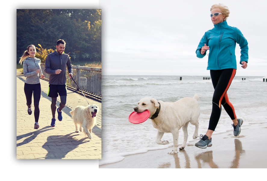 Picture of people running with dogs