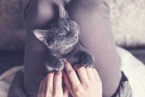 Picture of a grey cat being held