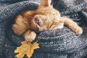Picture of of a orange kitten wrapped in a blanket