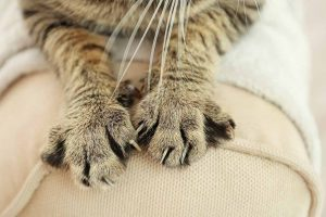 Picture of cats claws on the sofa