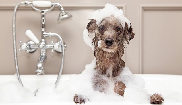 Picture of dog taking a bath