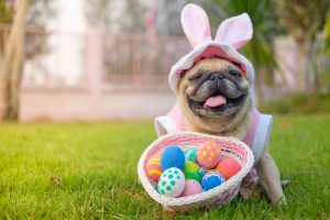 Picture of a dog dressed up a easter