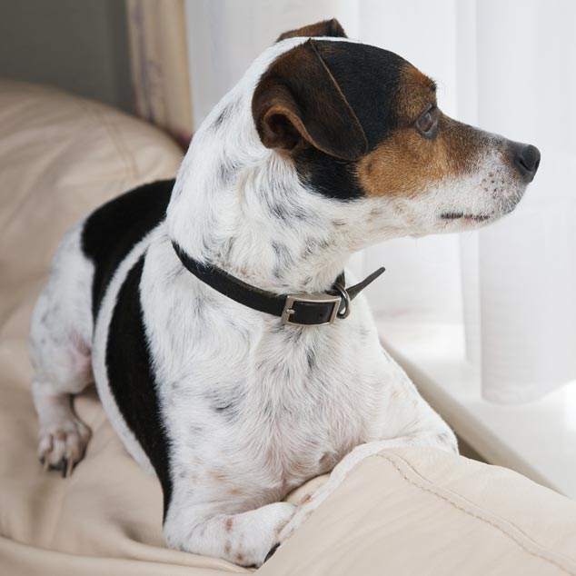 Picture of dog sitting on a sofa looking out the window