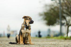 Picture of dog at the park