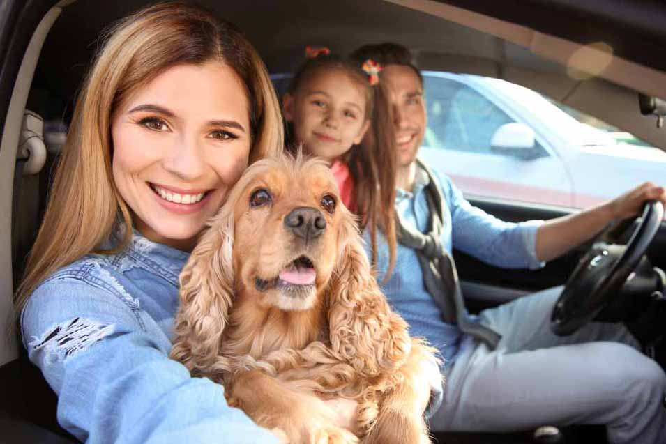 What Causes Motion Sickness In Dogs
