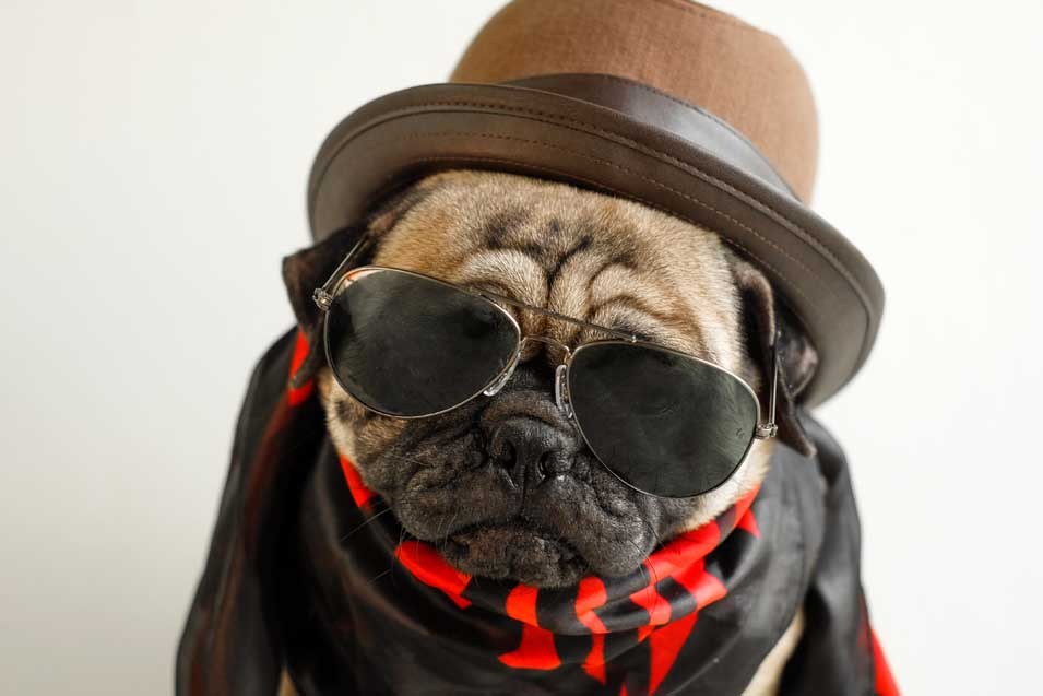 Picture of dressed up dog