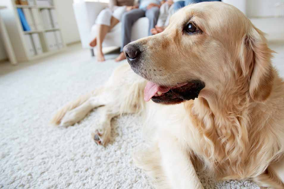 How To Dog Proof Your Furniture