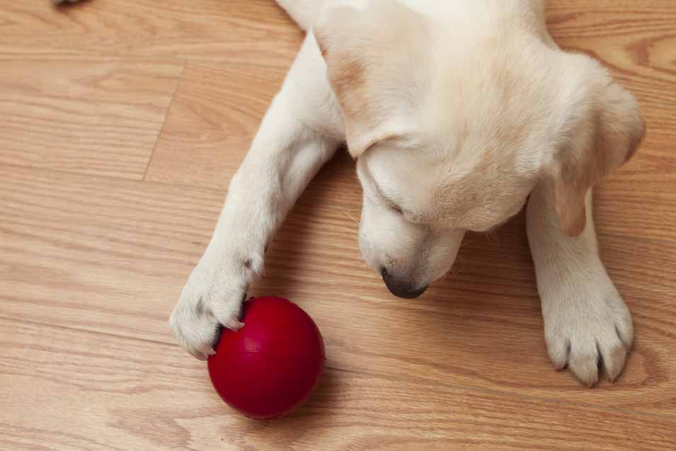 The best pet friendly flooring options hardwood vinyl for Dog friendly flooring ideas