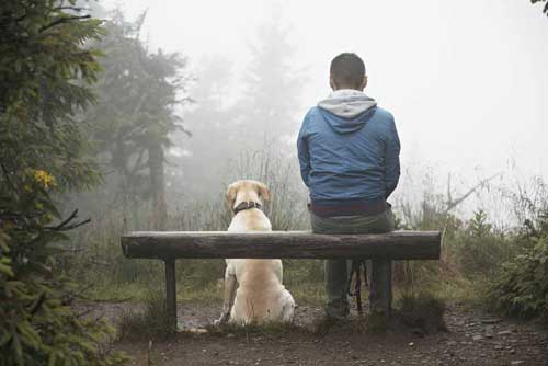 Image of a man and dog sitting on a bench in the fog