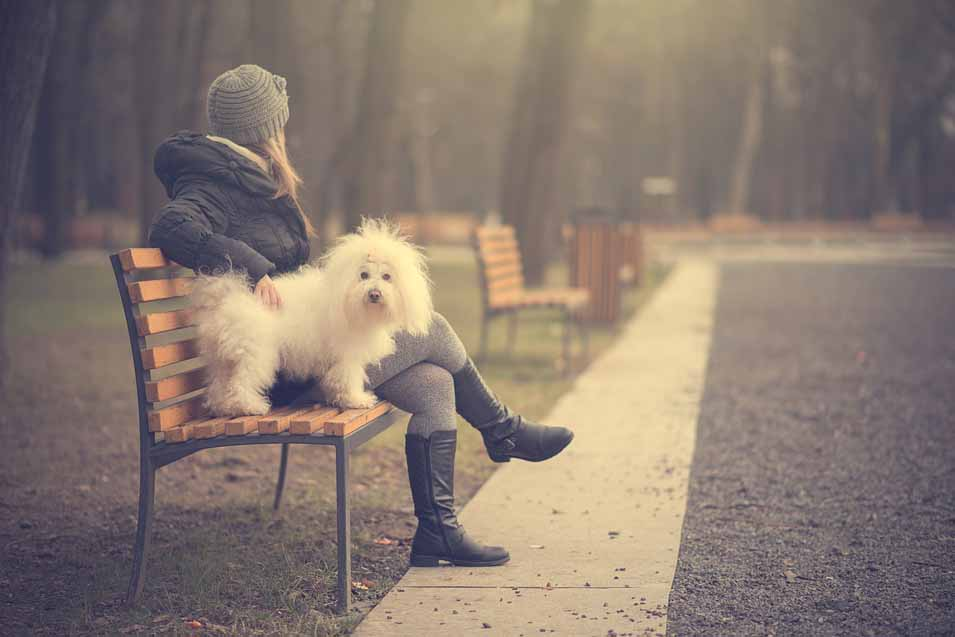 dog and woman sitting at the park