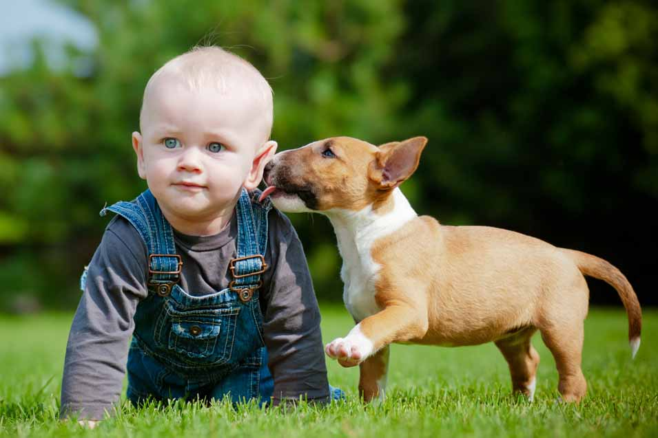 Picture of a young boy and a Bull Terrier