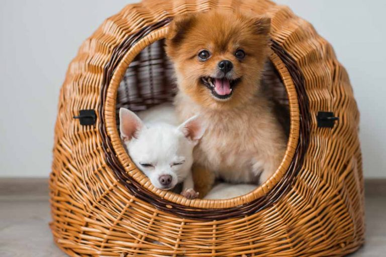 image of two dogs in a basket