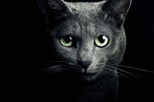 Picture of black cat with green eyes