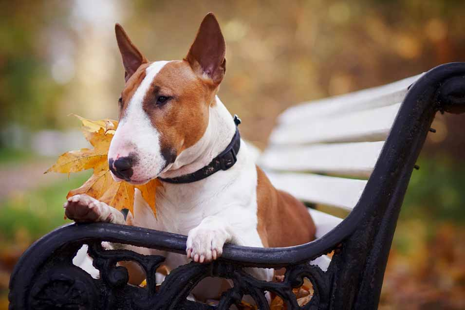 Picture of dog sitting on a park bench