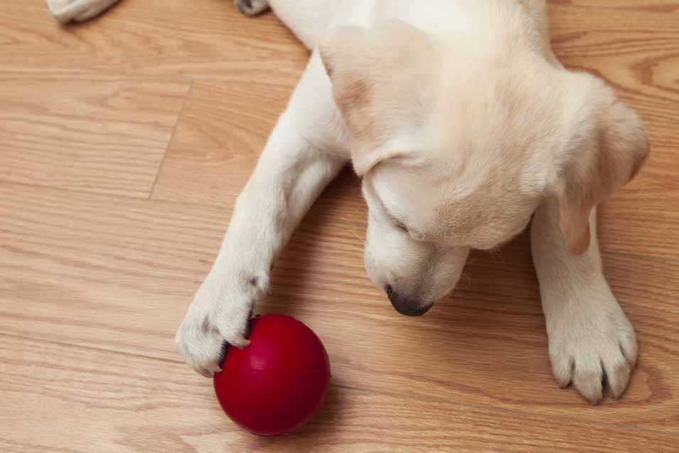 31 Jul The Best Pet Friendly Flooring If You Own A Dog