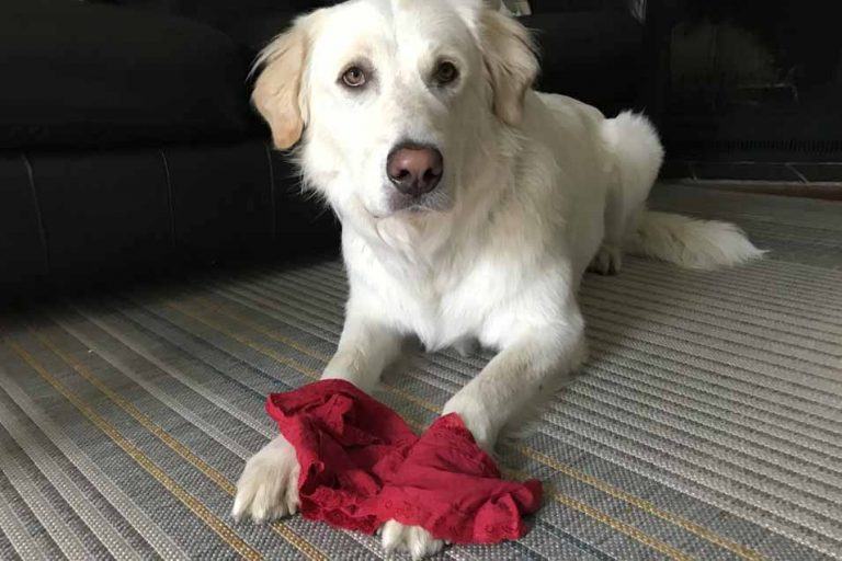 Picture of a dog and red underwear