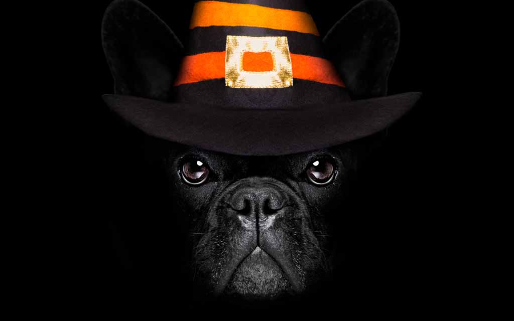 Picture of a dog wearing a hat at halloween