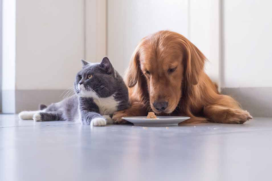 Picture of dog and a cat eating from a plate