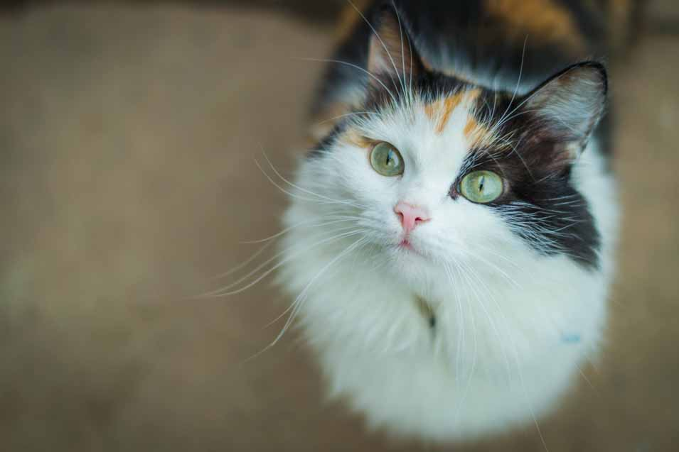 Picture of cat on the floor
