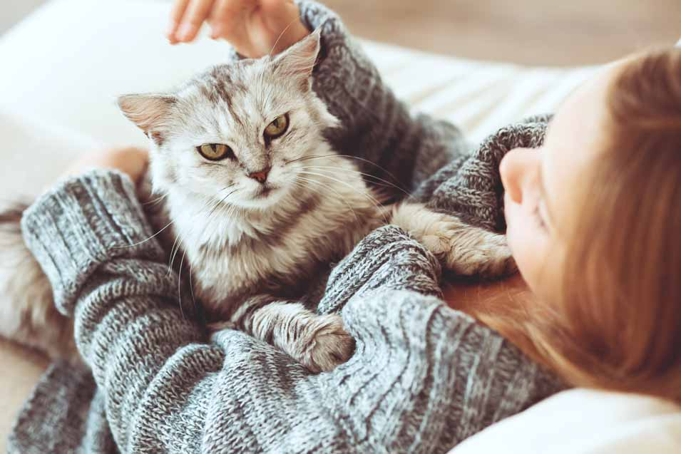 Picture of a angry looking cat on the sofa with a woman
