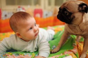 Picture of bay and a pug