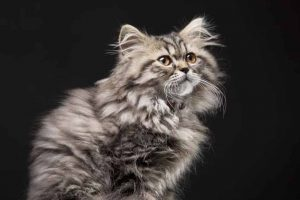 Picture of a hairy cat