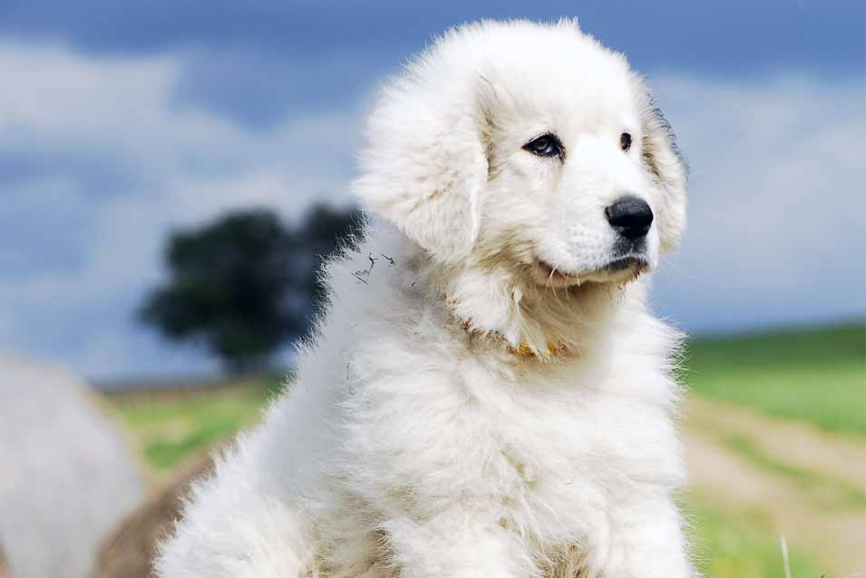 Picture of white puppy