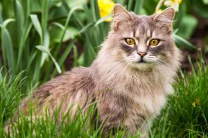 Picture of cat in the backyard