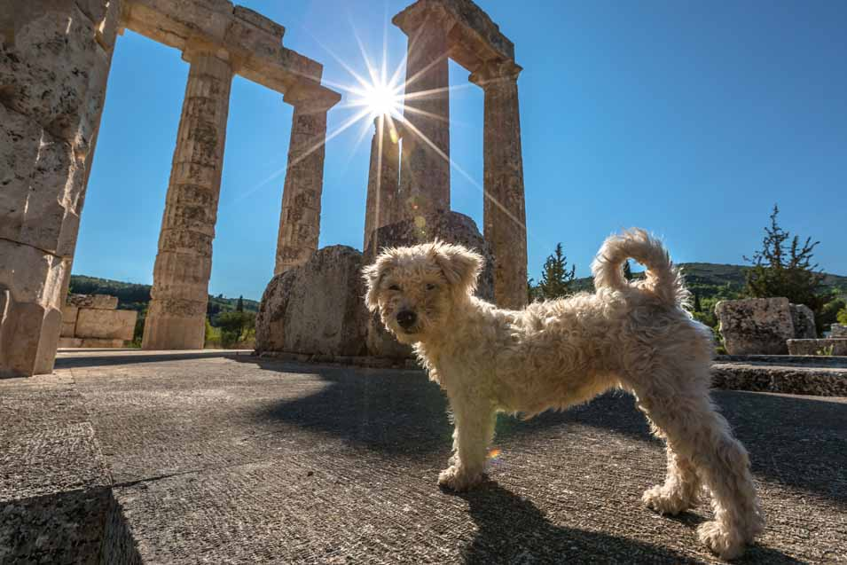 Picture of dog in Greece