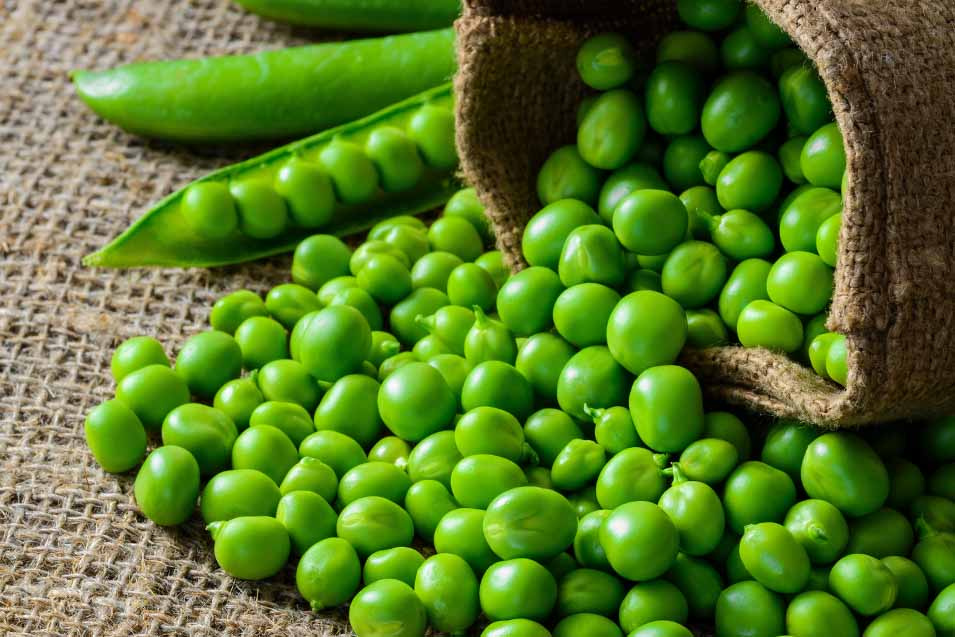 Are Peas Good For Dogs | Pet Friendly House