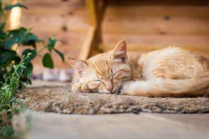 Picture of orange kitten