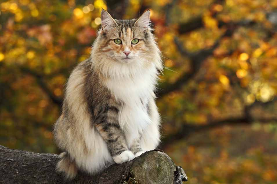 Picture of cat outside