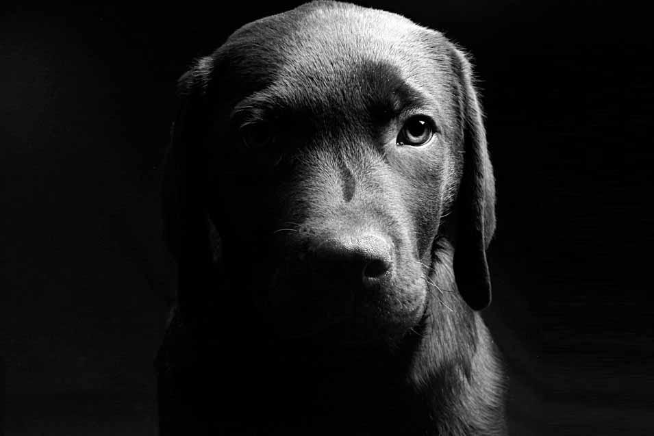 Picture of sad dog