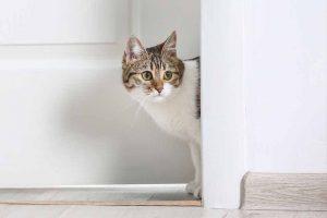 Picture of cat by the door