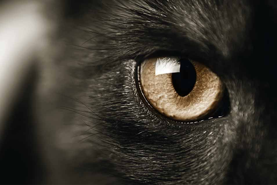 Picture of a cats eye