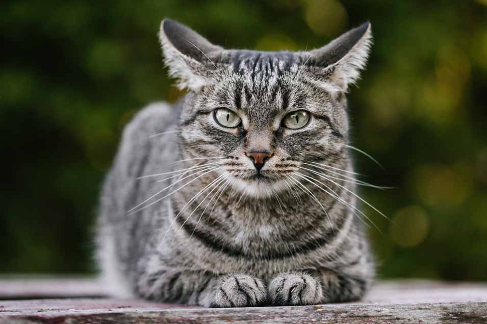 Picture of black and grey cat outside