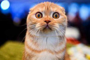 Picture of orange cat