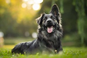 Picture of dog sitting on the grass