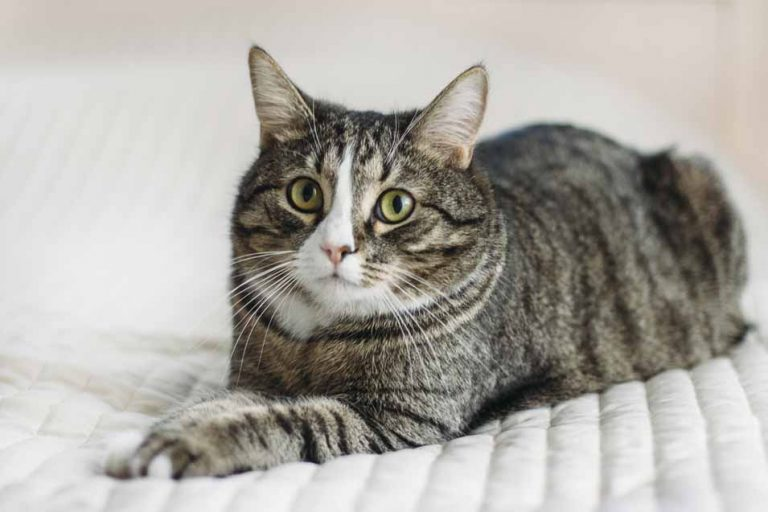Picture of cat on a bed