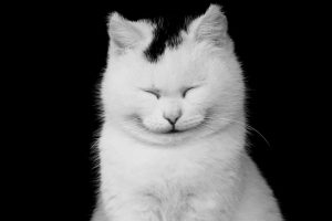 Picture of a smiling cat