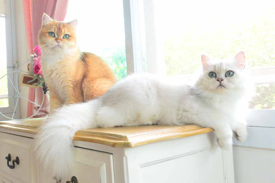 Picture of two cats on a dresser