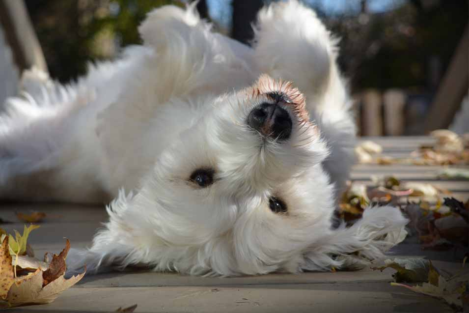 Picture of white dog ouside