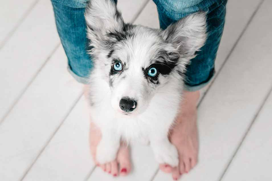 Picture of dog sitting on a woman's feet