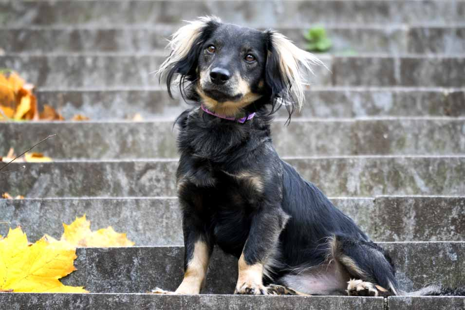 Picture of dog sitting on steps