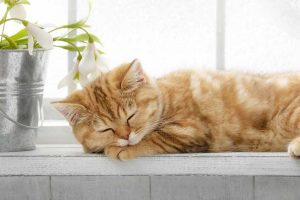 Picture of an orange kitten