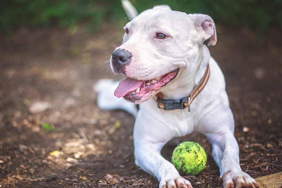 Picture of a dog with a ball